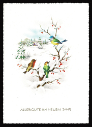 Small postcard haco 0376 winter landscape birds